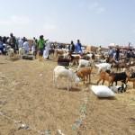 Marché de bétail