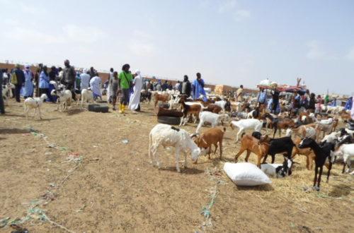 Article : Les mauritaniens pris dans le tourbillon des préparatifs de l'Aid